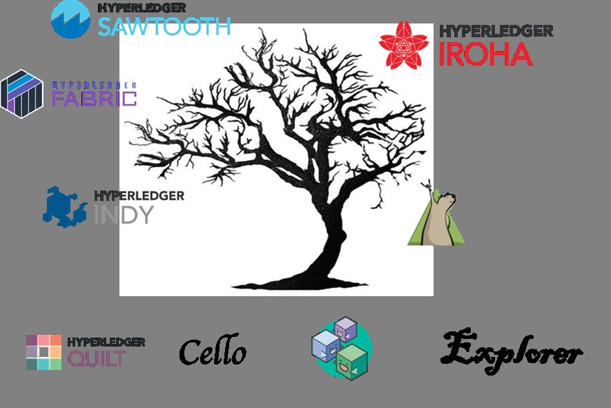 hyperledger estructura